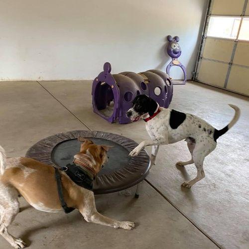 doggy daycare, dog day care, dog training, zen doggy den, julie cattabiani, wheat ridge dog boarding, dog boarding near me, dog boarding wheat ridge co 80033