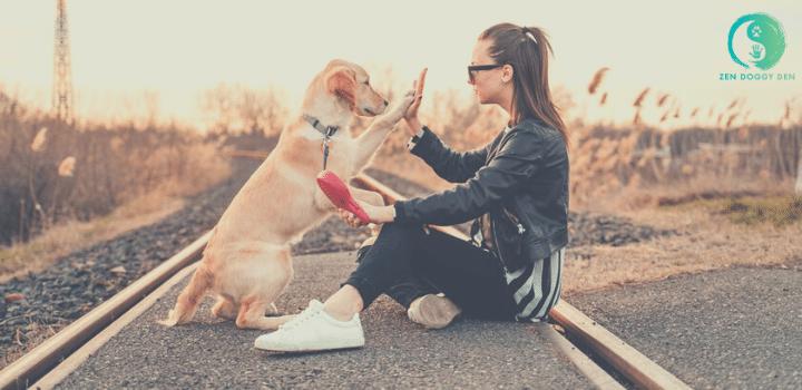 dog board, dog training, zen doggy den, denver, colorado, train, train dog